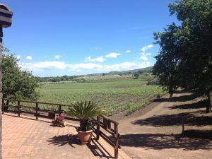 al cantara winery